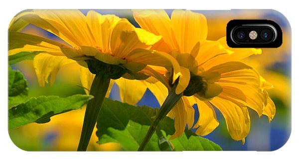 Mexican Sunflower Tree IPhone Case