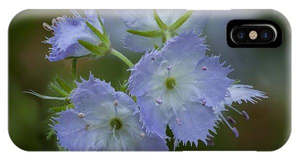 Miami Mist Bloom IPhone Case