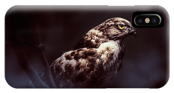 Hawk iPhone Case - Midnight Hawk by Jorgo Photography - Wall Art Gallery
