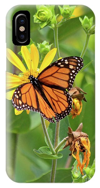 Mighty Monarch   IPhone Case