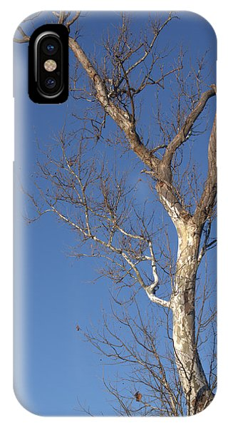 Mighty Tree IPhone Case