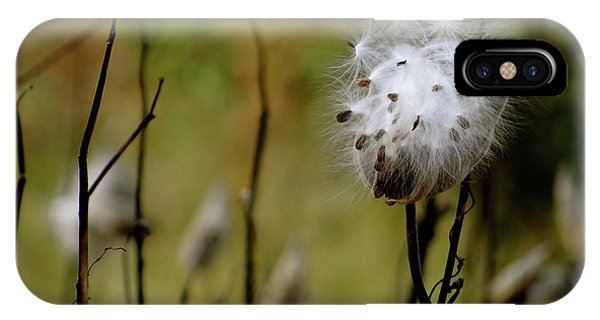 Milkweed In A Field IPhone Case