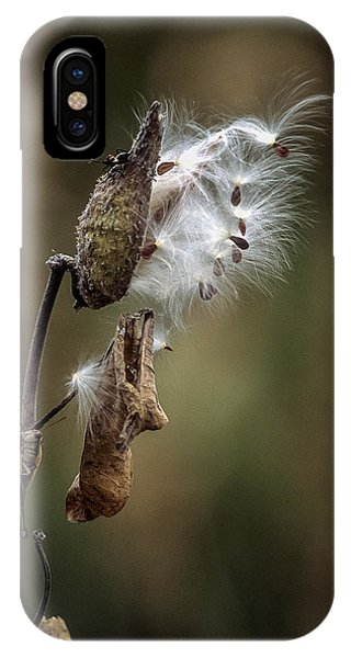 Milkweed Plant Dried And Blowing In The Wind IPhone Case