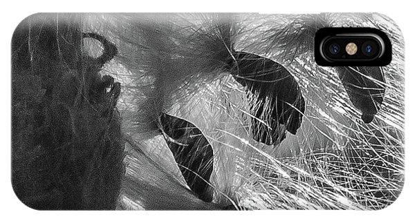Milkweed Sunburst In Black And White IPhone Case