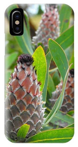 Mink Protea Flower IPhone Case