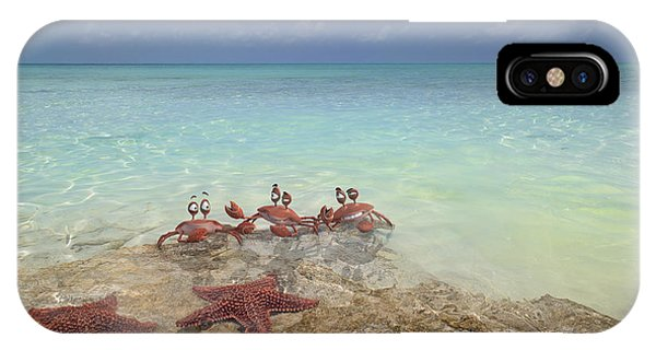 Carribbean iPhone Case - Mischievous Trio by Betsy Knapp