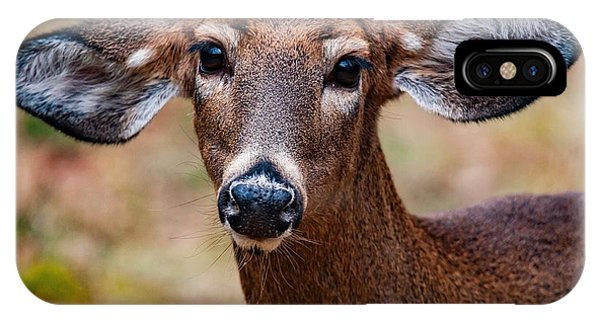 Miss Deer 1 IPhone Case
