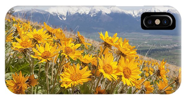 Mission Mountain Balsam Blooms IPhone Case