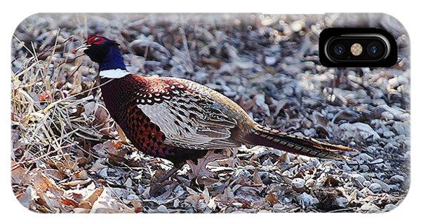 Missouri  Pheasant IPhone Case