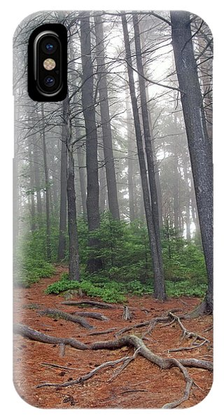 Misty Morning In An Algonquin Forest IPhone Case