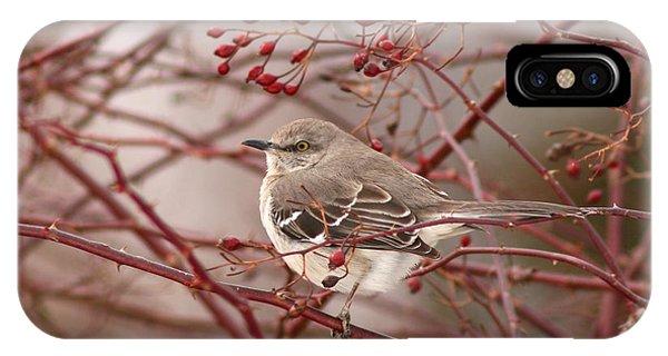 Mockingbird In Winter Rose Bush IPhone Case