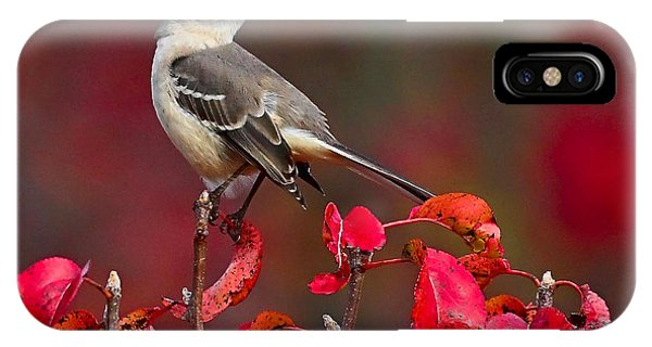 Mockingbird On Red IPhone Case