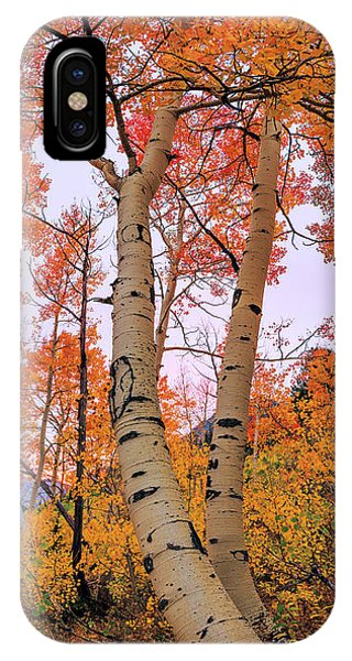 Foliage iPhone Case - Moments Of Fall by Chad Dutson