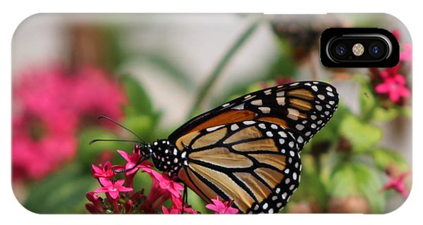 Monarch Butterfly On Fuchsia IPhone Case