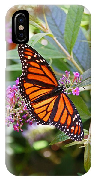 Monarch Butterfly 2 IPhone Case