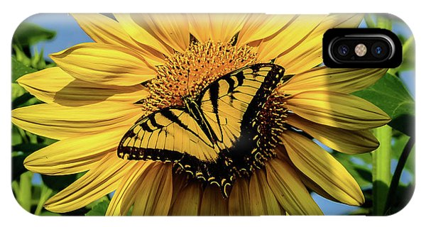 Male Eastern Tiger Swallowtail - Papilio Glaucus And Sunflower IPhone Case