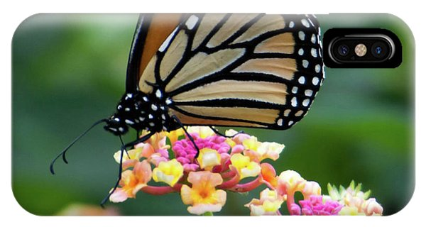 Monarch Butterfly Art II IPhone Case