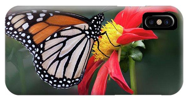 Monarch  Butterfly Enjoying A Dahlia IPhone Case