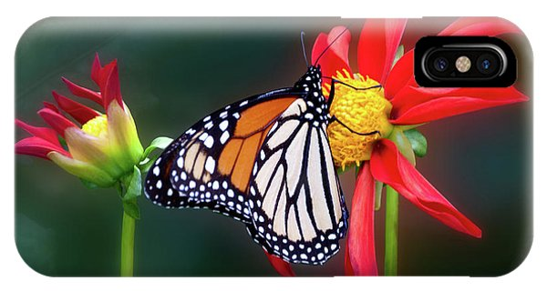 Monarch Butterfly Feasting On Dahlia 'kkk Katie' IPhone Case