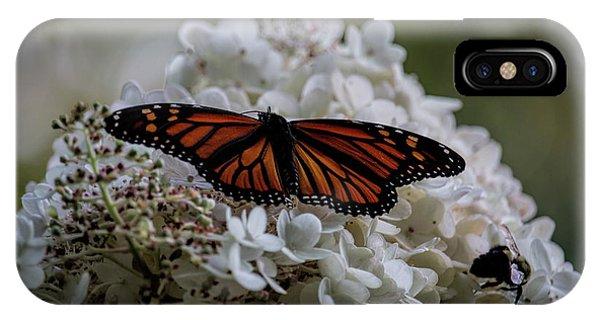 Monarch Butterfly Feeding On Hydrangea Tree IPhone Case