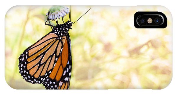 Monarch Butterfly Hanging On Wildflower IPhone Case