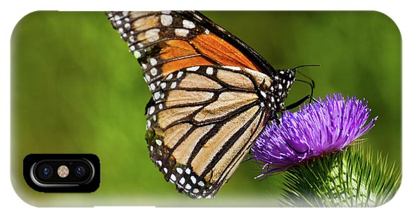 Monarch Butterfly On A Thistle IPhone Case