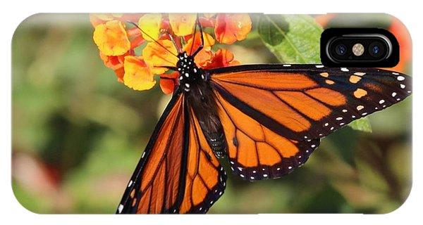 Monarch Butterfly On Orange Flower IPhone Case