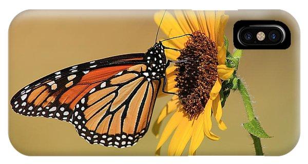 Monarch Butterfly On Sun Flower IPhone Case