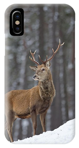 Monarch Of The Woods IPhone Case