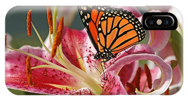 Lily iPhone Case - Monarch On A Stargazer Lily by Cindi Ressler