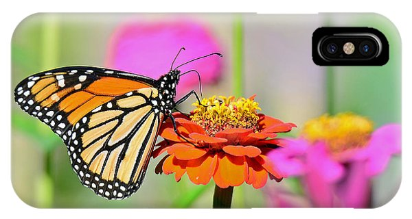 Monarch On A Zinnia IPhone Case