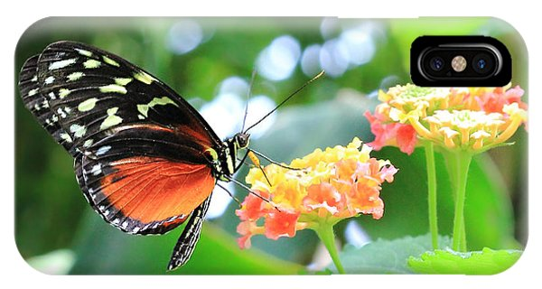 Monarch On Flower IPhone Case