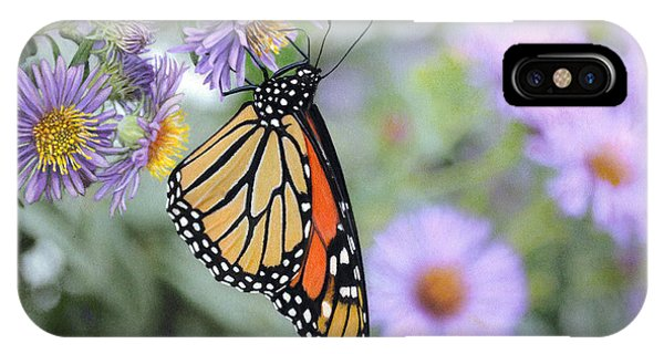 Monarch On New England Aster IPhone Case