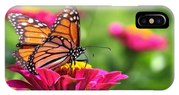 Monarch Visiting Zinnia IPhone Case
