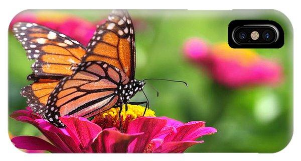 Monarch Visiting Zinnia IPhone Case