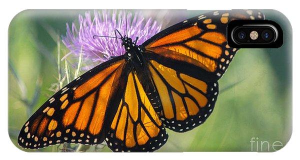 Monarch's Beauty IPhone Case