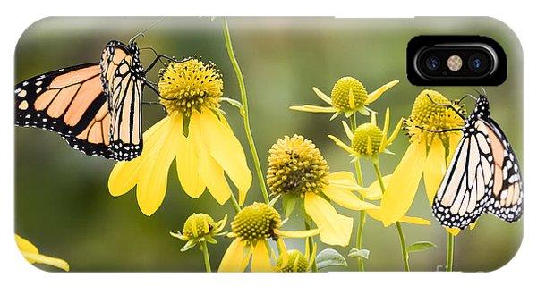 Monarchs Of Wisconsin IPhone Case