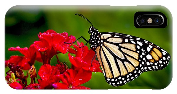 Monarh Butterfly IPhone Case