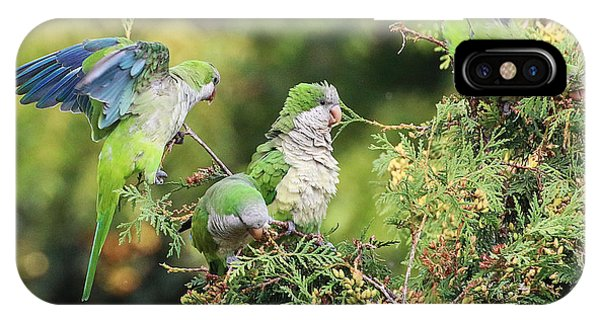 IPhone Case featuring the photograph Monk Parakeets Feeding On Evergreens 2 by William Selander