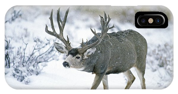 Monster Muley In Snow IPhone Case