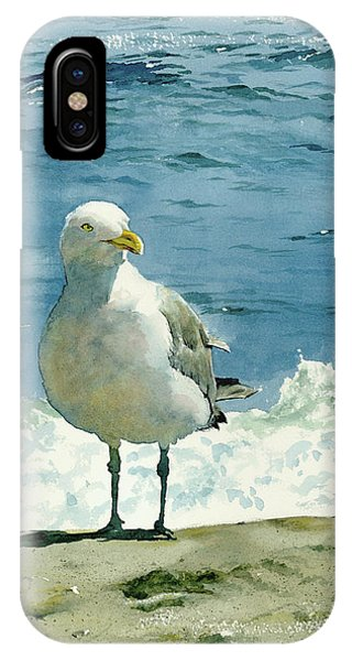 Beach iPhone Case - Montauk Gull by Tom Hedderich