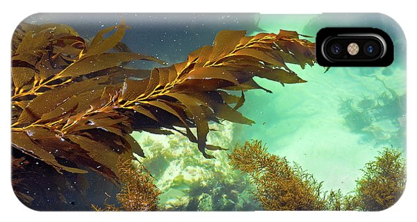 Monterey Bay Seaweed IPhone Case