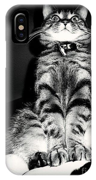 Monty Our Precious Cat IPhone Case