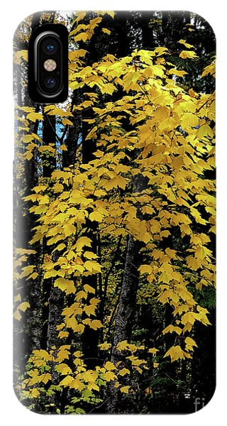 Moon Maple 2 IPhone Case