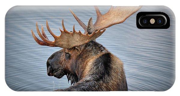 Moose Drool IPhone Case