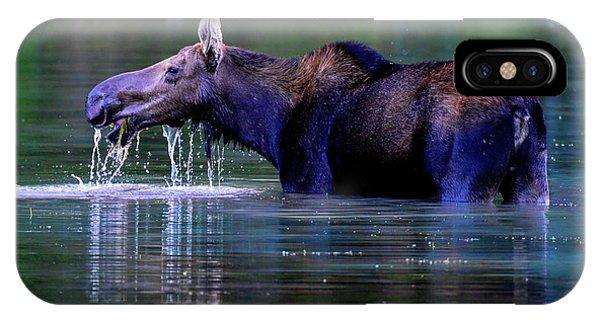 Moose In Swiftcurrent Lake, Glacier National Park IPhone Case