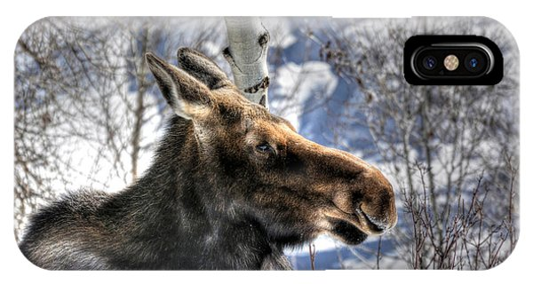 Moose On The Loose IPhone Case