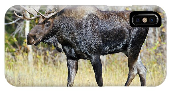 Moose On The Move IPhone Case