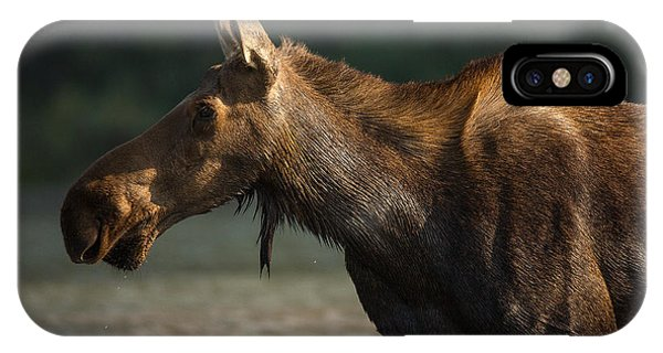 Moose Portrait // Glacier National Park  IPhone Case