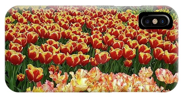 More #tulip Goodness From #keukenhof Phone Case by Dante Harker